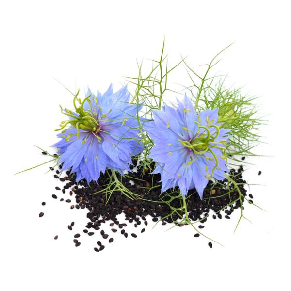 Graines et fleurs de nigelle