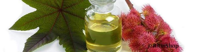 huile ricin fleur et feuille