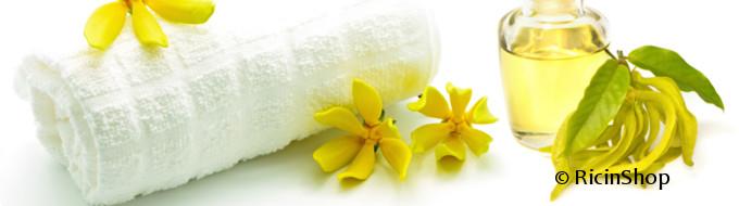 Les bienfaits de l'huile essentielle d'ylang ylang